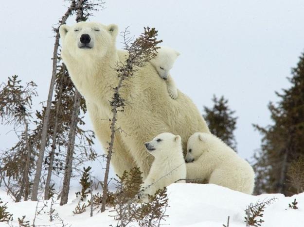 Mama i djeca